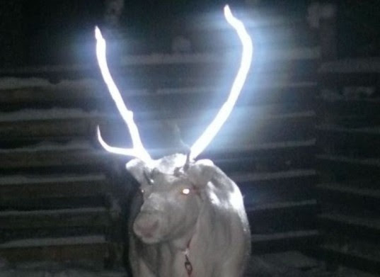 Finnish Reindeer Sprayed with Glow-in-the-Dark Liquid to Prevent Traffic Accidents